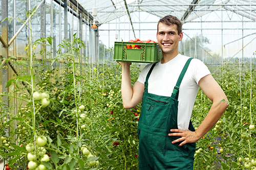 breeders agriculture software