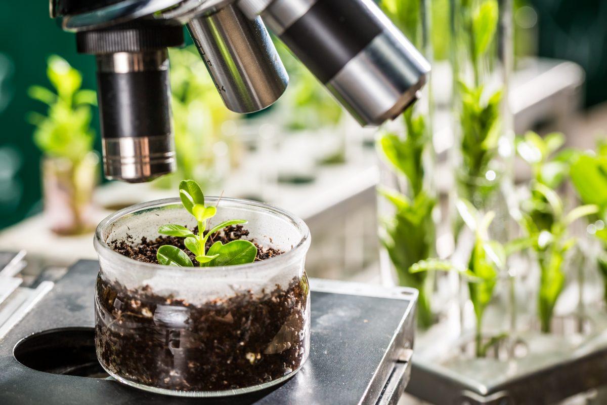 breeding-plant-craftsmanship